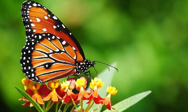 Μια ωραία πεταλούδα