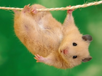 To ποντικάκι που ήθελε να αγγίξει ένα αστεράκι