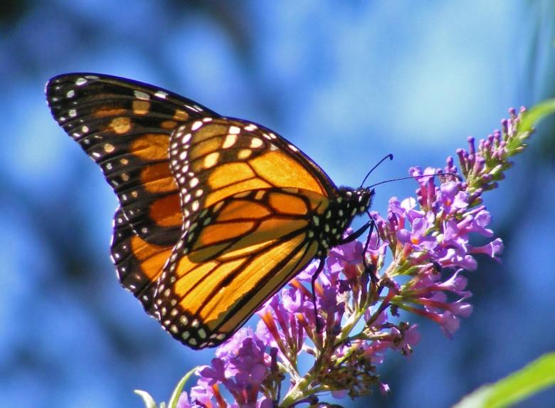 Η γέννηση της πεταλούδας