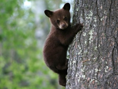 Η Λιχούδα Αρκουδίτσα