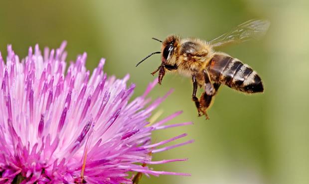 Περνά, περνά η Μέλισσα