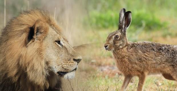 Το Λιοντάρι κι ο Λαγός